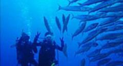 初心者の方も気軽にダイビングの世界を体験!ライセンス取得前の1日講座☆海洋での本格体験!